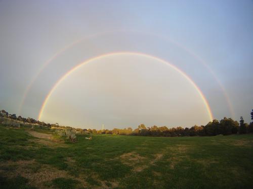 Bernie Rainbow